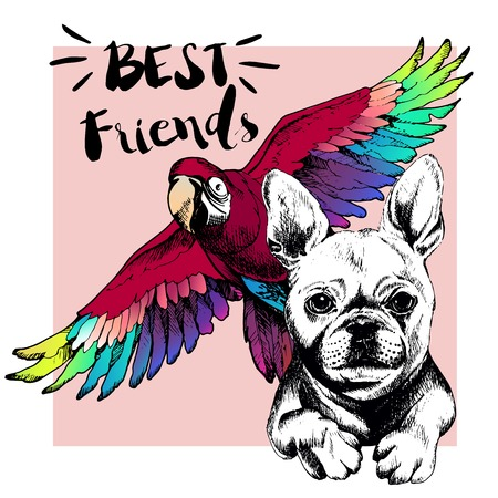 best shelter: Vector hand drawn concept of french bulldog and ara macaw frienship. Color hand drawn domestic dog and wild exotic parrot illustration. Decorated with square border. Best friends. Illustration