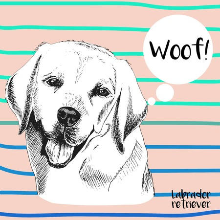 cerulean: Vector close up portrait of labrador retriever. Hand drawn domestic pet dog  illustration. Isolated on peach background with cerulean strips. Illustration
