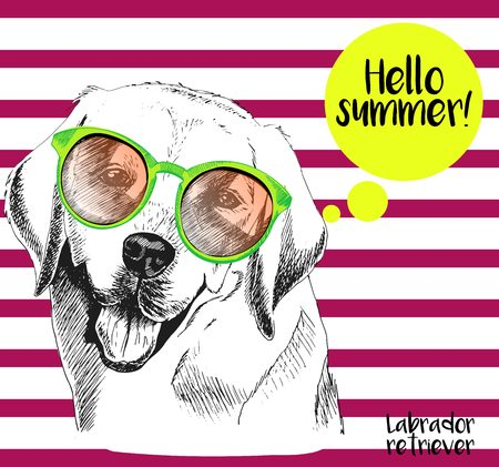 sunglassess: Vector close up portrait of labrador retriever wearing the sunglassess. Hello summer. Hand drawn  domectic dog illustration. Isolated on background with cherry strips.