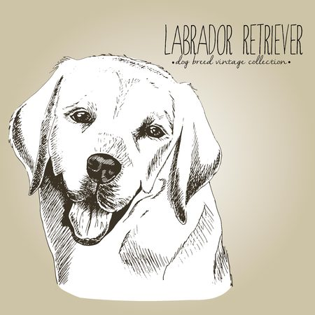 Vector close up portrait of labrador retriever. Hand drawn domestic pet dog illustration in shebby vintage style. Isolated on craft brown background.