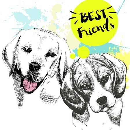 frienship: Vector hand drawn concept of labradoe retriever and beagle frienship. Color hand drawn domestic dog illustration. Decorated with blue blots. Best friends.