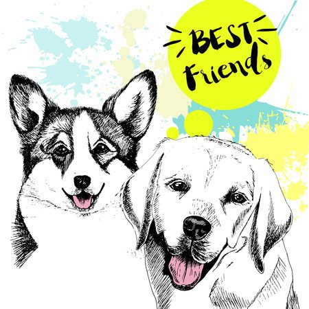 Vector hand drawn concept of labradoe retriever and welsh corgi frienship. Color hand drawn domestic dog illustration. Decorated with blue blots. Best friends.