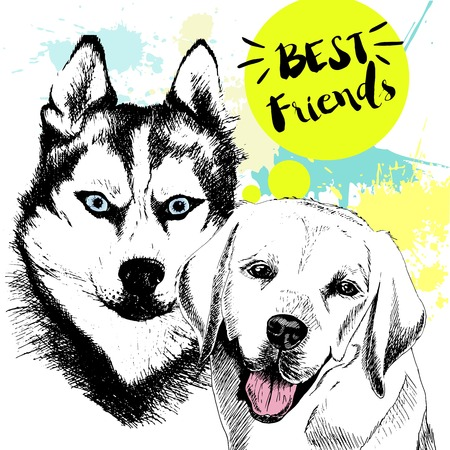 frienship: Vector hand drawn concept of labradoe retriever and siberian husky frienship. Color hand drawn domestic dog illustration. Decorated with blue blots. Best friends.