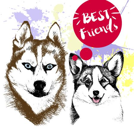 pembroke welsh corgi: Vector hand drawn concept of siberian huskyr and welsh corgi frienship. Color hand drawn domestic dog illustration. Decorated with red blots. Best friends.