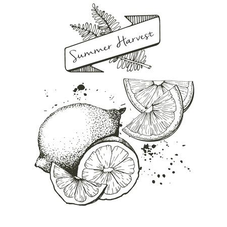 Vector set of summer harvest. Decorated with banner, fern leaves and blots. Fresh detox fruit collection. Lemon, lime oan orange slices.