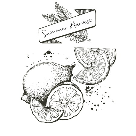 Vector set of summer harvest. Decorated with banner, fern leaves and blots. Fresh detox fruit collection. Lemon, lime oan orange slices.