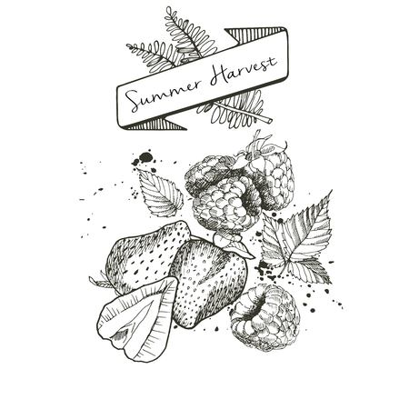 detox: Vector set of summer harvest. Decorated with banner, fern leaves and blots. Fresh detox fruit collection. Strawberry and rasbberry.