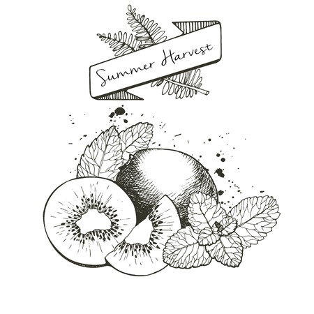 mint leaves: Vector set of summer harvest. Decorated with banner, fern leaves and blots. Fresh detox fruit collection. Kiwiw fruit and mint leaves. Illustration