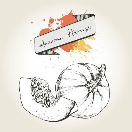 vegetable garden: Vector hand drawn illustration of pumpkin slices. Engraved autumn vegetable isolated on vintage background. Harvest for cooking.