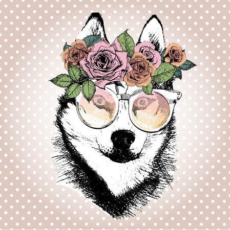 alaskan malamute: Vecotr portrait of dog, wearing the floral wreath and sunglasses. Hand drawn vintage trendy illustration. Siberian husky breed. Isolated on polka dot and rose gold background.