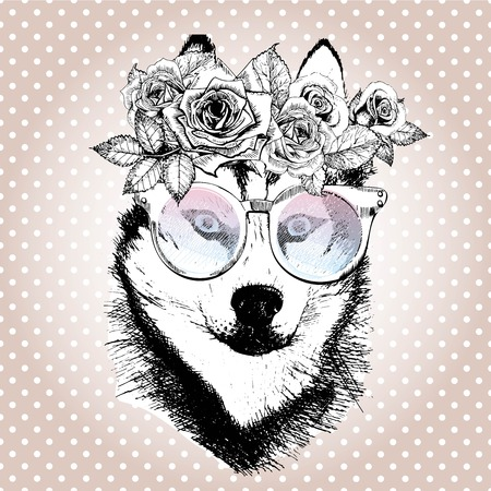 siberia: Vecotr portrait of dog, wearing the floral wreath and sunglasses. Hand drawn vintage trendy illustration. Siberian husky breed. Isolated on polka dot and rose gold background.