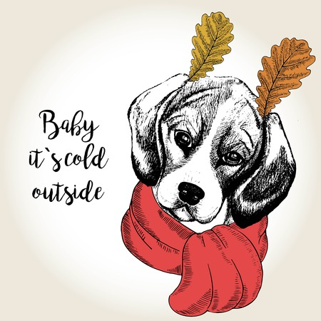 dog ears: Vector close up portrait of beagle, wearing the red scarf and oak leaf ears. Hand drawn domestic dog illustration. Baby its cold outside. Autumn engraved funny illustration.