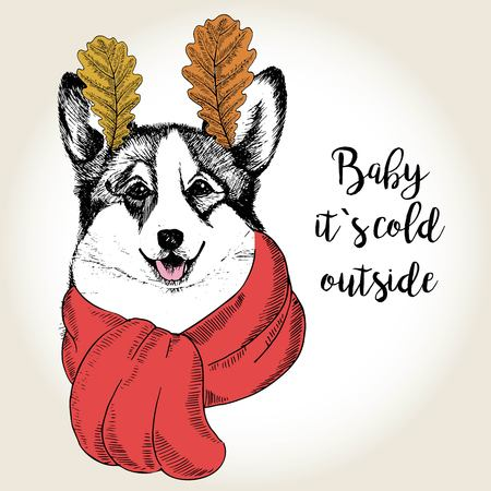 dog ears: Vector close up portrait of welsh corgi, wearing the red scarf and oak leaf ears. Hand drawn domestic dog illustration. Baby it s cold outside. Autumn engraved funny illustration. Illustration