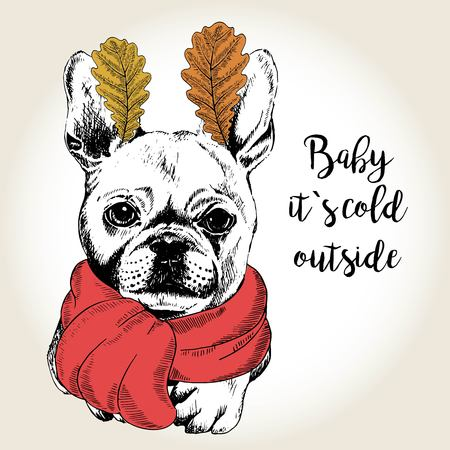 dog ears: Vector close up portrait of french bulldog, wearing the red scarf and oak leaf ears. Hand drawn domestic dog illustration. Baby it s cold outside. Autumn engraved funny illustration. Illustration