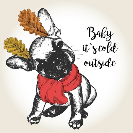 dog ears: Vector close up portrait of french bulldog puppy, wearing the red scarf and oak leaf ears. Hand drawn domestic dog illustration. Baby it s cold outside. Autumn engraved funny illustration. Illustration
