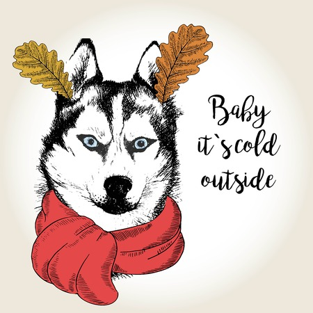 Vector close up portrait of siberian husky, wearing the red scarf and oak leaf ears. Hand drawn domestic dog illustration. Baby it s cold outside. Autumn engraved funny illustration.
