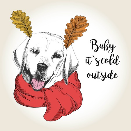 dog ears: Vector close up portrait of labrador retriever, wearing the red scarf and oak leaf ears. Hand drawn domestic dog illustration. Baby it s cold outside. Autumn engraved funny illustration.