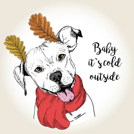 dog ears: Vector close up portrait of english pittbull, wearing the red scarf and oak leaf ears. Hand drawn domestic dog illustration. Baby it s cold outside. Autumn engraved funny illustration.