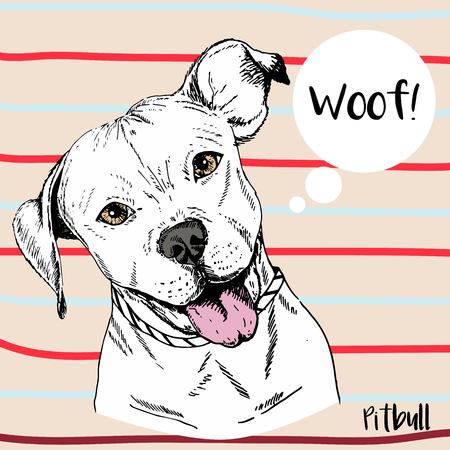 stafford: Vector close up portrait of pitbull. Hand drawn domestic pet dog illustration. Isolated on neutral background with red and light blue strips.