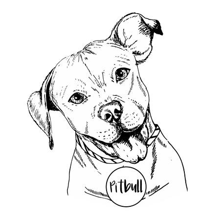 Vector close up portrait of english pitbull. Hand drawn domestic pet dog illustration. Isolated on  white background.