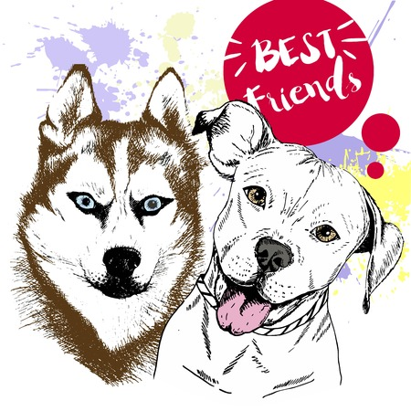 Vector hand drawn concept of siberian huskyr and pitbull frienship. Color hand drawn domestic dog illustration. Decorated with red blots. Best friends.