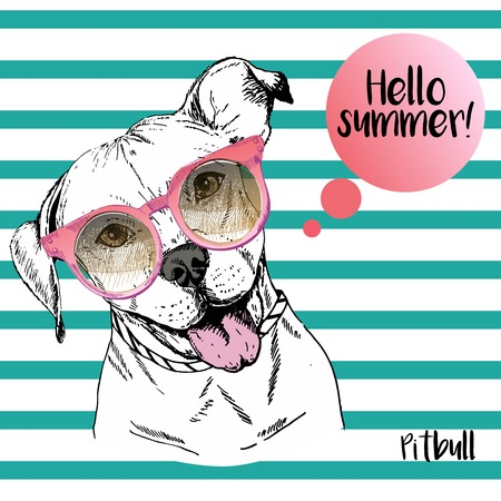 sunglassess: Vector close up portrait of english pitbull wearing the sunglassess. Hello summer. Hand drawn  domectic dog illustration. Isolated on background with sea blue strips.