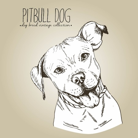 Vector close up portrait of english pitbull. Hand drawn domestic pet dog illustration in shebby vintage style. Isolated on craft brown background. Ilustração