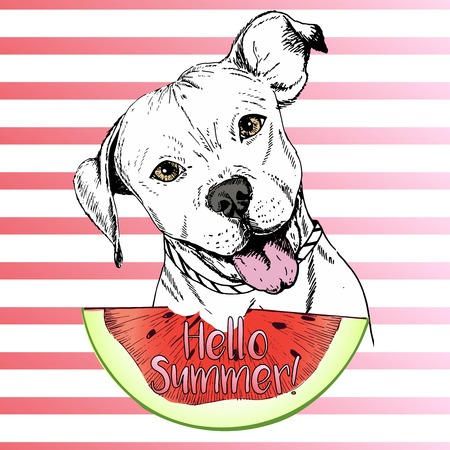 stafford: Vector hand drawn illustration of english pitbull dog eating the watermelon slice. Hello summer. Isolated on pink strips. fresh fashion vibrant summer poster. Illustration