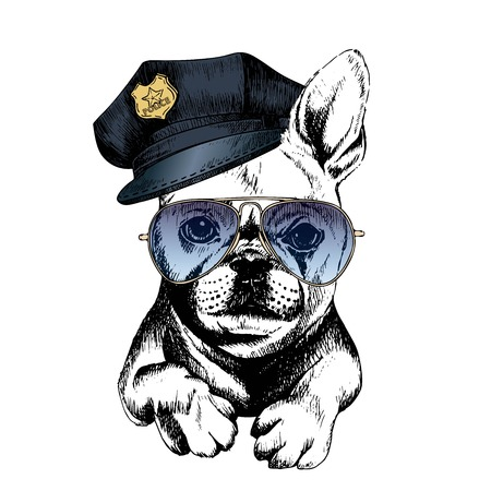 police dog: Vector close up portrait of police dog.French bulldog wearing the peak cap and sunglasses. Hand drawn domestic pet dog illustration. Isolated on white background.