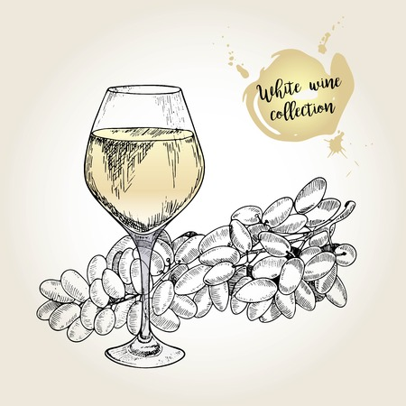 sultana: Vector set of white wine collection. Engraved vintage style. Glass and sultana grape. Isolated on grunge background. Deorated with lettering. Use for restaurant, cafe, store, food, menu, design.