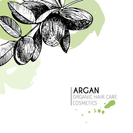 Vector conjunto de ingredientes para el cuidado del cabello. dibujado a mano orgánico elementos. rama de argán. Utilizar para el paquete de cosmética, tienda, productos, salón de spa, wellnes programa, procedimiento, la piel, cuidado del cabello Foto de archivo - 63834592