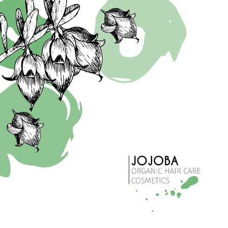 Vector set of hair care ingredients. Organic hand drawn elements. Jojoba branch. Use for cosmetic package, shop, store, products, spa salon, wellnes program, procedure, skin, hair care