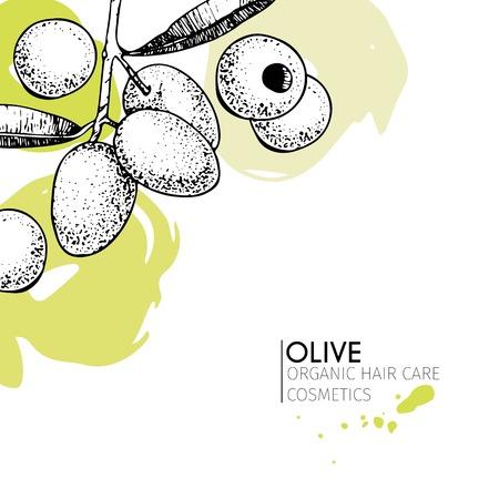 Vector conjunto de ingredientes para el cuidado del cabello. dibujado a mano orgánico elementos. Rama de olivo. Utilizar para el paquete de cosmética, tienda, productos, salón de spa, wellnes programa, procedimiento, la piel, cuidado del cabello Foto de archivo - 63834598