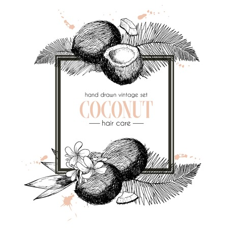 Vector set of hair care ingredients. Organic hand drawn elements. Square border composition. Coconut branch. Use for cosmetic package, shop, store, products, identity, branding, skin, hair care Illustration