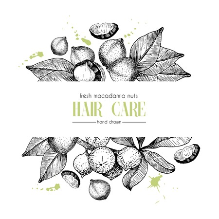 Vector set of hair care ingredients. Organic hand drawn elements. Template for macadamia branch. Use for cosmetic package, shop, store, products, spa salon, wellnes program, procedure, skin, hair care Stock Illustratie