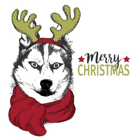 rim: Vector portrait of Christmas dog. Siberian husky dog wearing deer horn rim and scarf. Christmas poster, flyer, greeting card, holiday, celebration, party, pet shop, shelter, pharmacy decoration.