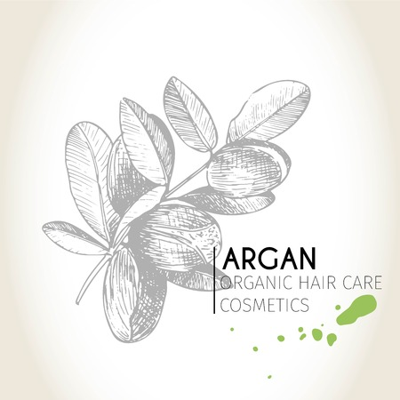 treatment plant: Vector set of hair care ingredients. Organic hand drawn elements. Argan branch. Use for cosmetic package, shop, store, products, spa salon, wellnes program, procedure, skin, hair care