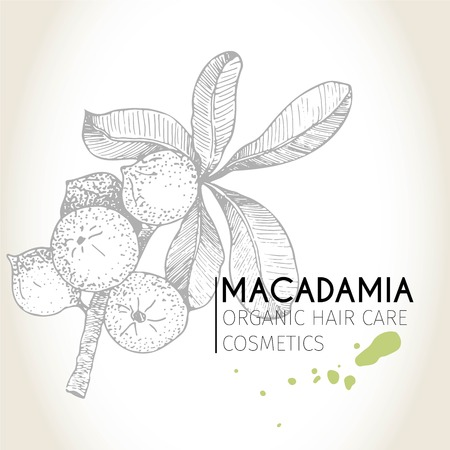 macadamia: Vector set of hair care ingredients. Organic hand drawn elements. Macadamia branch. Use for cosmetic package, shop, store, products, spa salon, wellnes program, procedure, skin, hair care Illustration