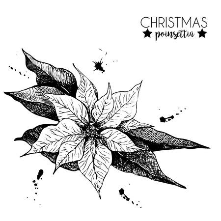 手描きのポインセチア。ヴィンテージには、植物の図が刻まれています。クリスマス装飾。モノクロのポインセチアの花のイラスト。クリスマスの