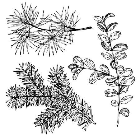 VEctor hand drawn fir, pine and boxwood branches. Vintage engraved botanical illustration. Christmas decoration. Monocrome  illustration. Use for Xmas holiday decorating.