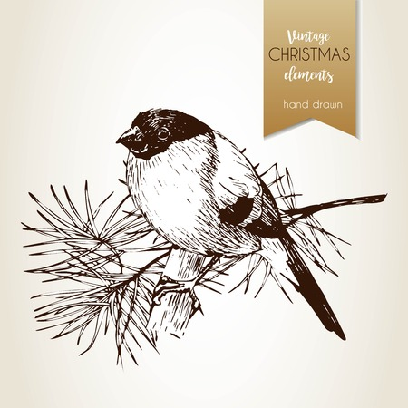 Vector hand drawn illustartion of bullfinch bird. Vintage engraved style. Isolated on grunge background. Christmas decoration.  Use for seasonal greeting, party decor, holiday advertisement.