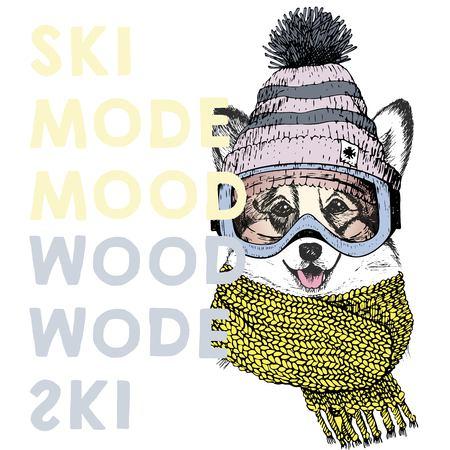 pembroke welsh corgi: Vector poster with close up portrait of welsh corgi dog.Ski mode mood. Puppy wearing beanie, scarf, goggles. Hand drawn illustration. Use for sport shop, resort, ski-rent promotion, print, design.