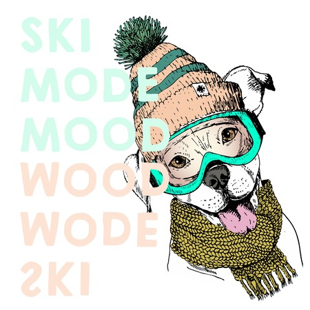beanie: Vector poster with close up portrait of pit bull dog.Ski mode mood. Puppy wearing beanie, scarf and snow goggles. Hand drawn illustration. Use for sport shop, resort, ski-rent promotion, print design.