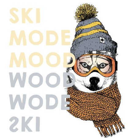 beanie: Vector poster with close up portrait of siberian husky dog.Ski mode mood. Puppy wearing beanie, scarf and goggles. Hand drawn illustration.Use for sport shop, resort, ski-rent promotion, print design. Illustration