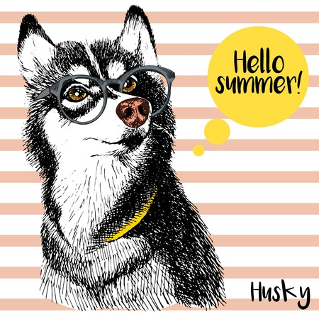 sunglassess: Vector close up portrait of siberian husky wearing the sunglassess. Bright hello summer husky portrait. Hand drawn domestic pet dog illustration. Isolated on background with peach stripes. Illustration
