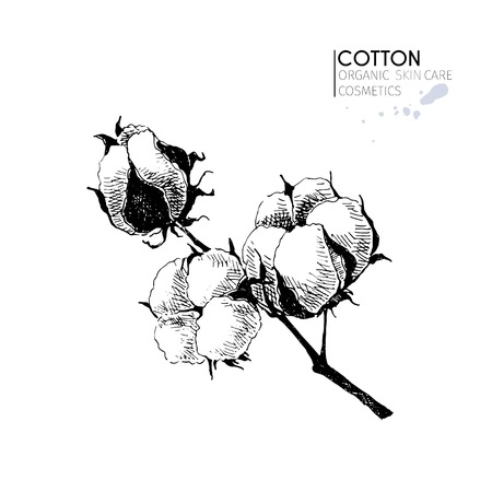 cotton bud: Vector set of skin care ingredients. Organic hand drawn elements. Cotton branch. Use for cosmetic package, shop, store, products,  spa salon, wellnes program, procedure, skin, hair care