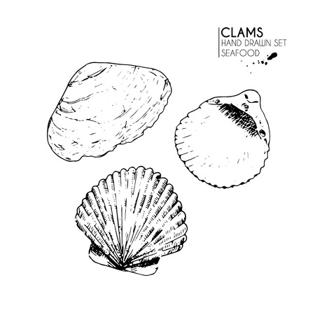 cockleshell: Vector hand drawn set of seafood icons. Isolated clams. Engraved art. Delicious marine food menu sketched objects. Use for resaurant, meal, market, store, menu, party decoration, other design Illustration