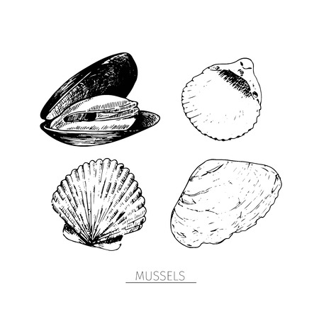 sketched: Vector hand drawn set of seafood icons. Isolated clams. Engraved art. Delicious marine food menu sketched objects. Use for resaurant, meal, market, store, menu, party decoration, other design Illustration