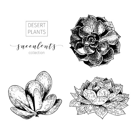 Vector set of succculents. Hand drawn botanical art isolated on white background. Floral illustration. Decorated with lettering. Desert plants cactus collection. Use for your design
