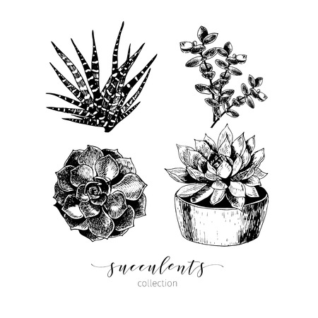 terrarium: Vector set of succculents. Hand drawn botanical art isolated on white background. Floral illustration. Decorated with lettering. Desert plants cactus collection. Use for your design